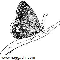 dr-butterfly-12(www.naggashi.com)
