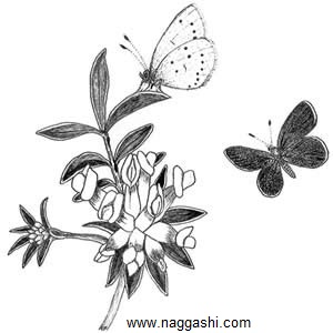 dr-butterfly-13(www.naggashi.com)