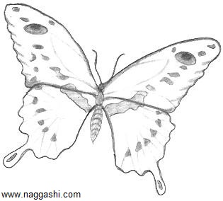 dr-butterfly-2(www.naggashi.com)