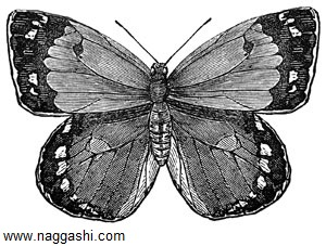 dr-butterfly-6(www.naggashi.com)