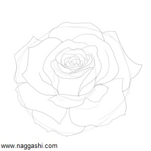 how-to-draw-a-rose-sketch
