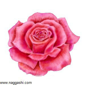 learn-to-draw-a-rose