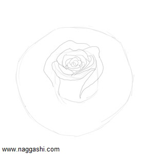 rose-bud-sketch3
